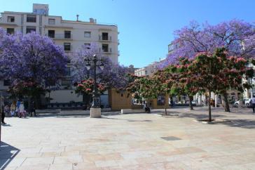 Copaci mov Plaza de la Merced Malaga