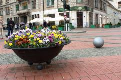 flori piata sfantul gheorghe timisoara