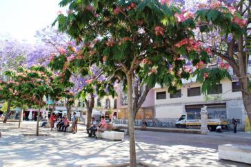 Malaga Plaza de la Merced