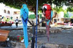 Papagali Rhodos